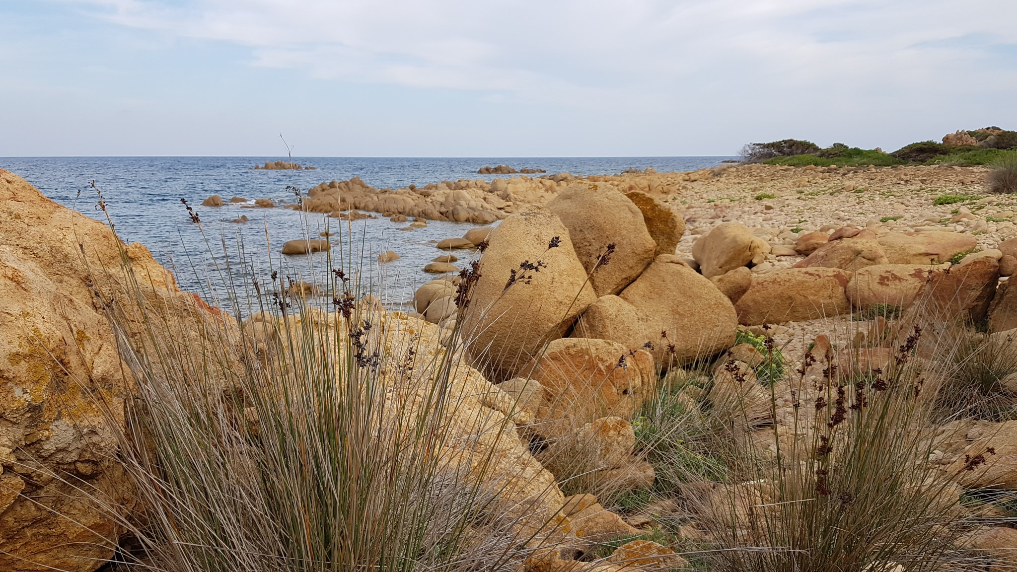 rocky beach with reeds on the coast of Sardinia, Capo Comino