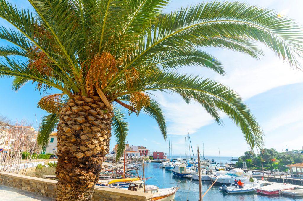 Palm tree and boats in Stintino harbor. Sardinia, Italy